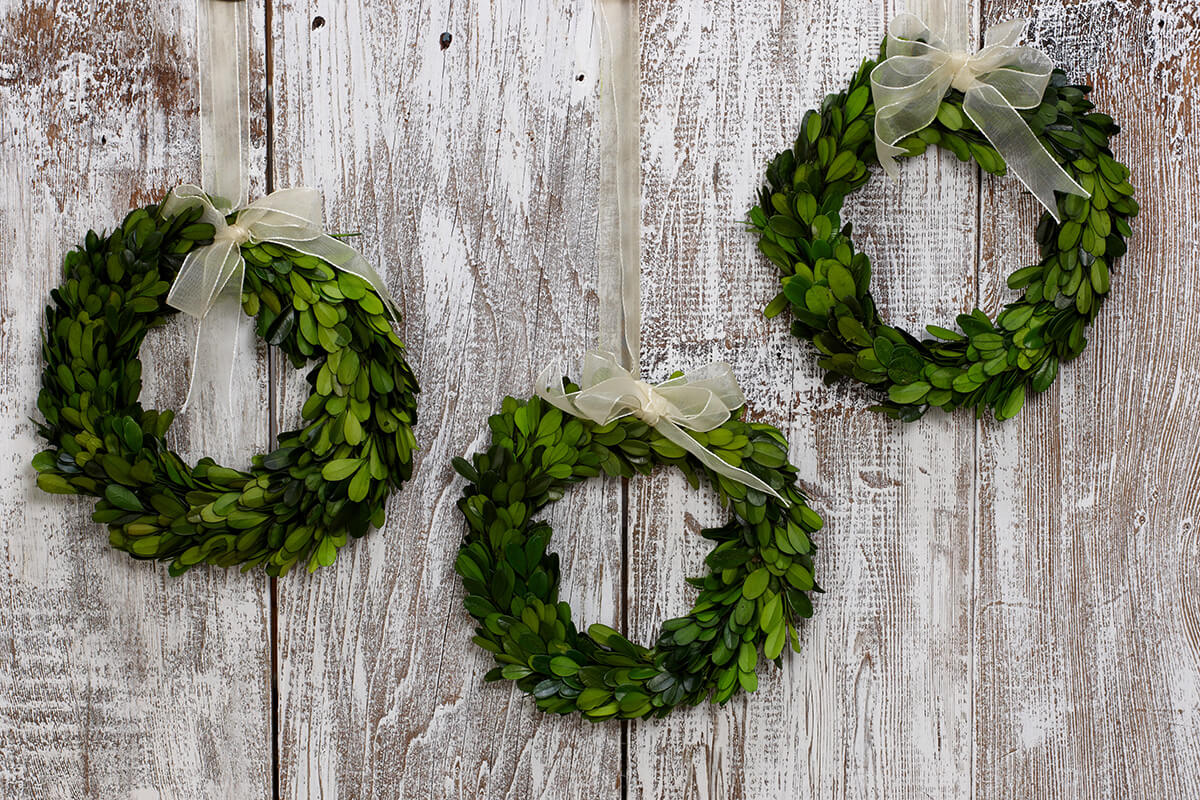8 Preserved Round Boxwood Wreaths With Ribbon