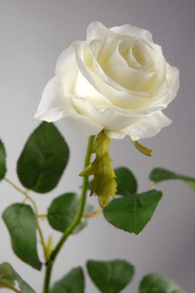 Cream White Long Stem Silk Roses 27