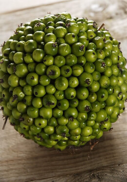 Berries Muscari Hypericum Texas Tallow