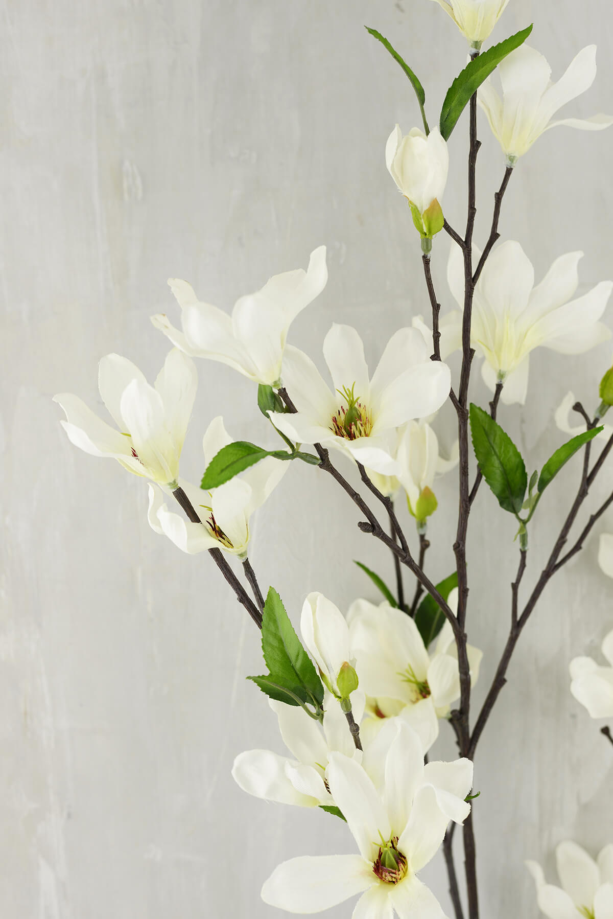 Magnolia Flowering Branches Cream Flowers 44
