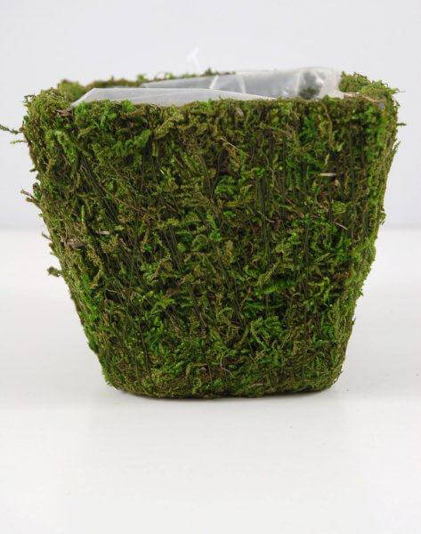 Moss Covered Pot WLiner 4in
