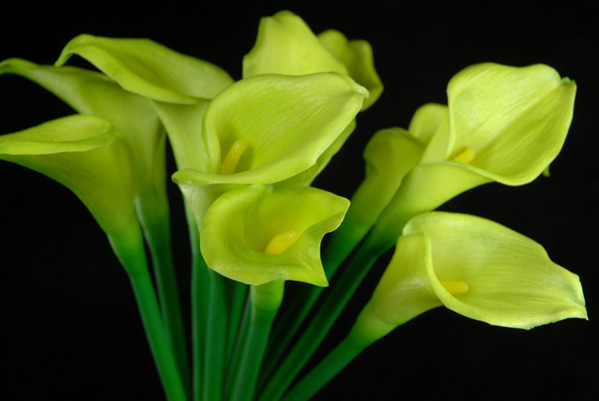 Natural Touch Hand Tied Green Calla Lily Wedding Bouquet 14