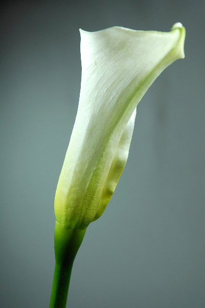Natural Touch Flowers Medium Calla Lily 25