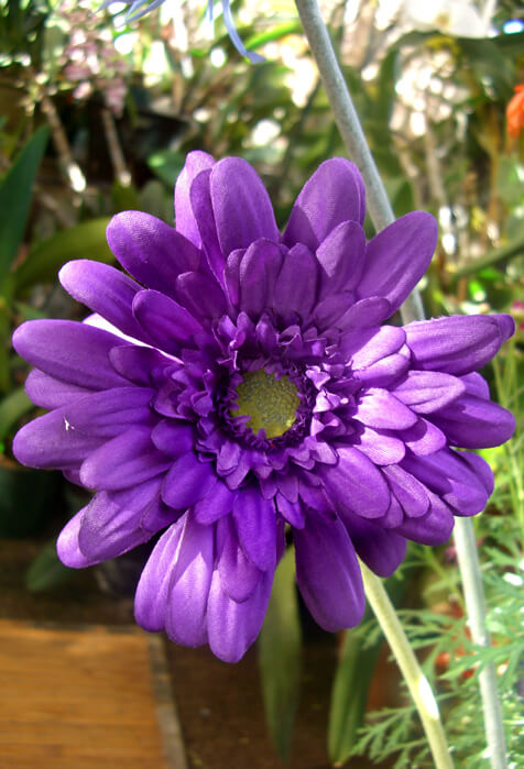 12 Purple Silk Gerbera Daisy Flowers