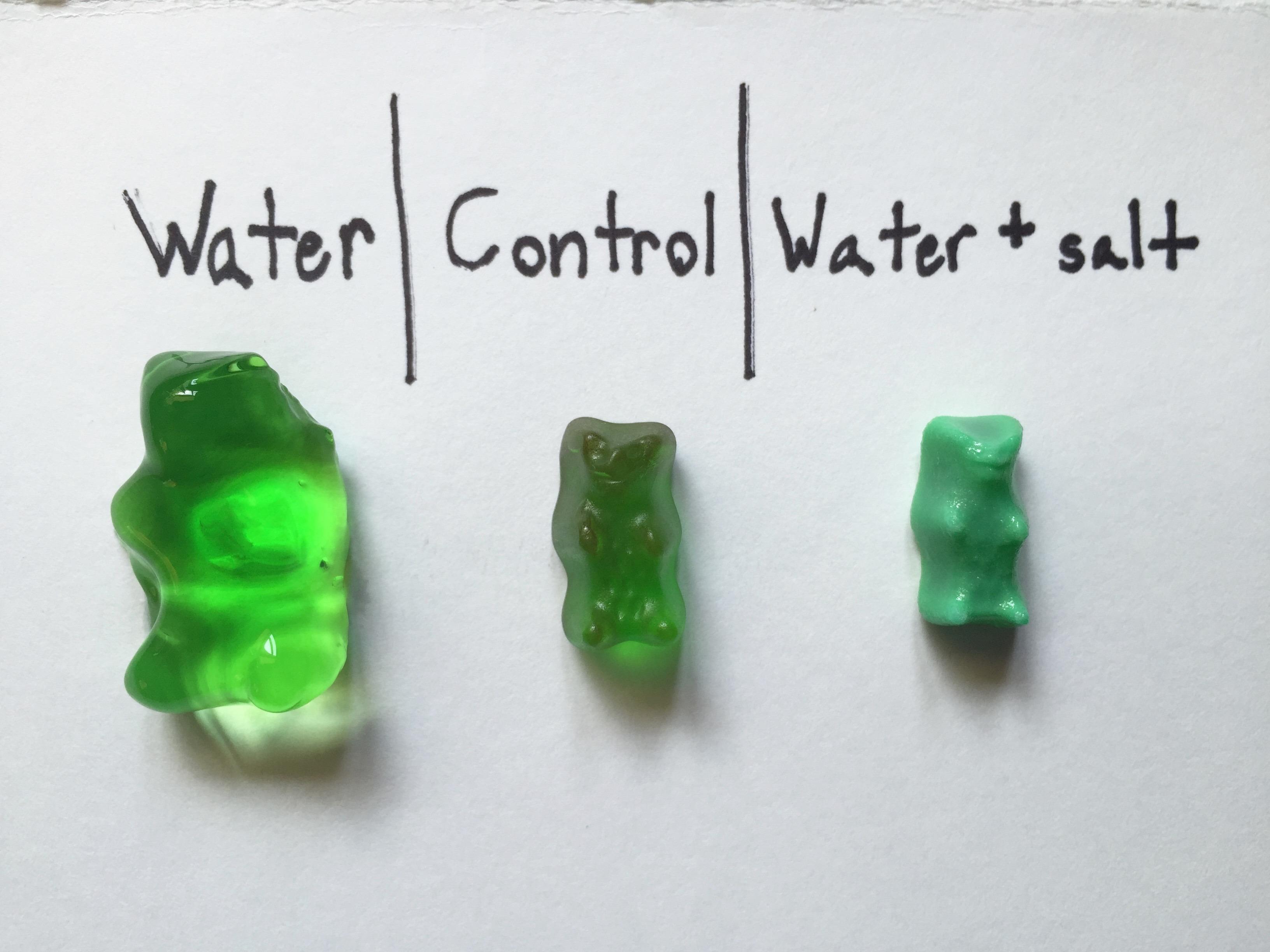 Osmosis With Gummi Bears
