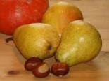 Herbstbirne 'Harrow Sweet', Stamm 40-60 cm, 120-160 cm, Pyrus communis 'Harrow Sweet', Containerware