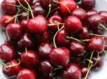 Süßkirsche 'Sunburst', Stamm 40-60 cm, 120-160 cm, Prunus avium 'Sunburst', Wurzelware