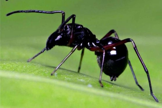 Researchers Found Jumping Spiders Produce Milk