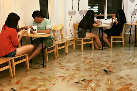 Amix Coffee Pet Fishes Cafe In Vietnam