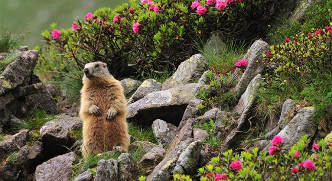 No Matter What the Groundhog Says, Here are 5 Reasons to Sell Before Spring! | Simplifying The Market