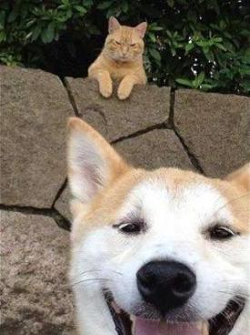 「いじわる 猫」の画像検索結果