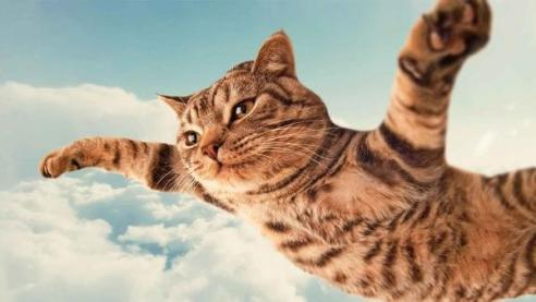 「猫 パラシュート」の画像検索結果