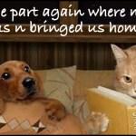 *Adoptions*