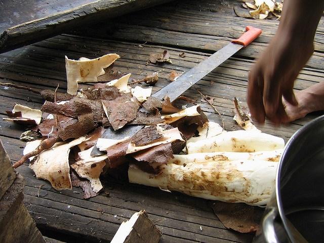 travail du manioc