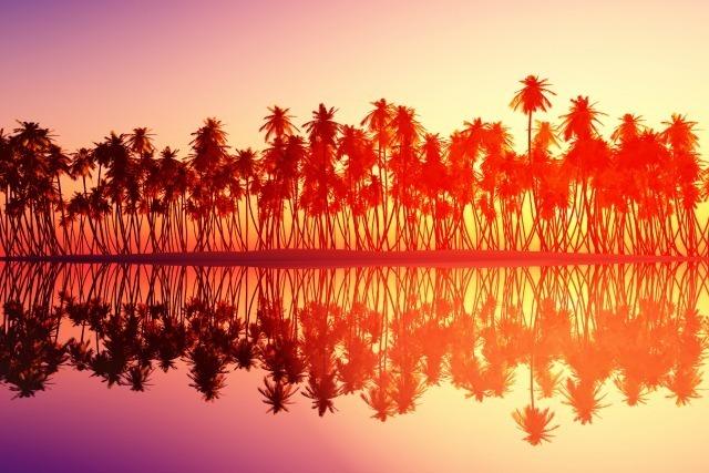 coucher de soleil palmiers