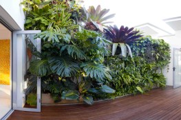 The benefits of greenwalls