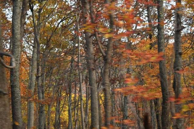 Fall at Wintergreen