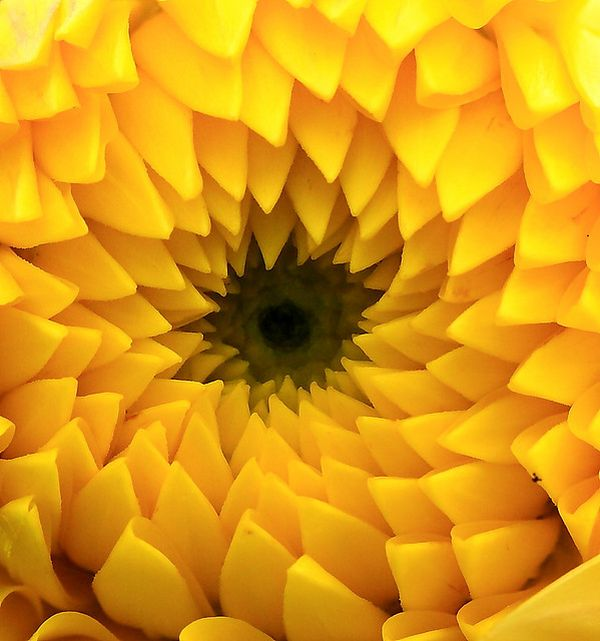 nature's pattern photography