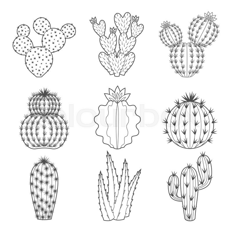 Vector Set Of Contour Cactus And Stock Vector
