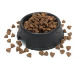 A dog bowl filled with dog food | Stock image | Colourbox