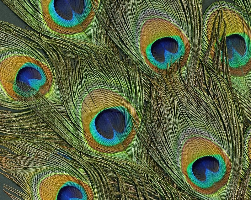 Full Frame Abstract Background With Some Colorful Peacock
