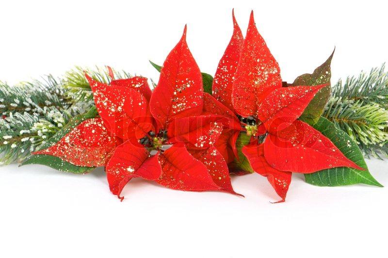Poinsettia Red Christmas Flower Festive Decoration