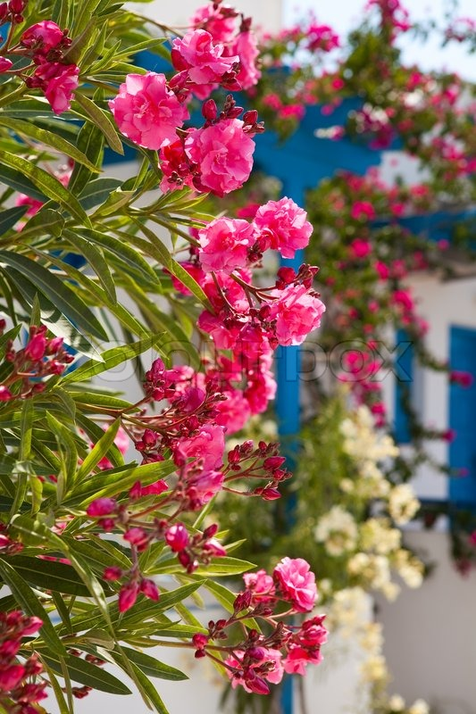 Beautiful Detail Of Pink Flowers In Stock Image