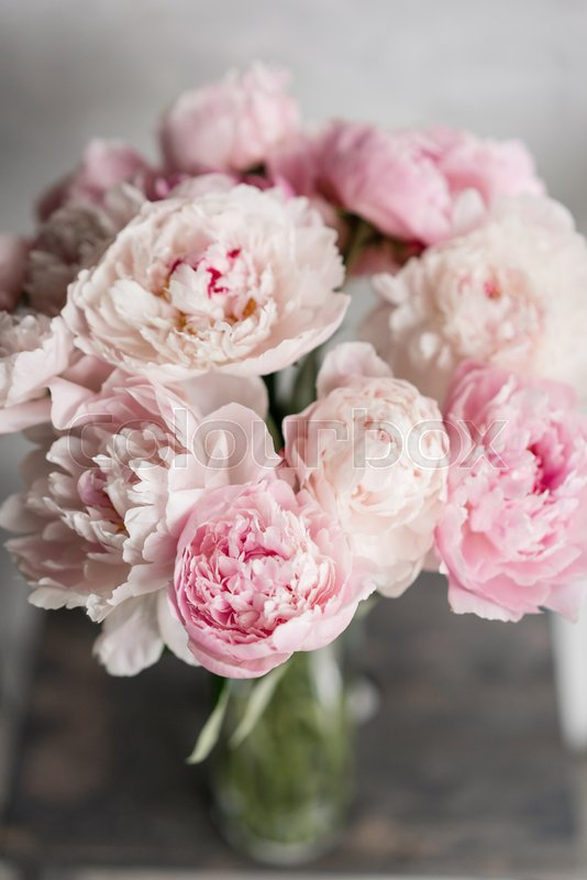 Cute and lovely peony  many layered petals  Bunch pale pink peonies     Cute and lovely peony  many layered petals  Bunch pale pink peonies flowers  light gray background  Wallpaper  Vertical photo   Stock Photo   Colourbox