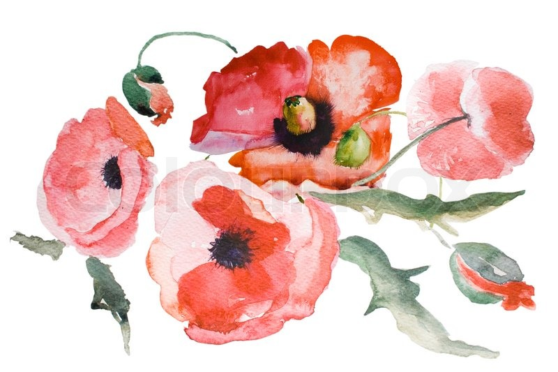 Watercolor Poppy flower   Stock Photo   Colourbox