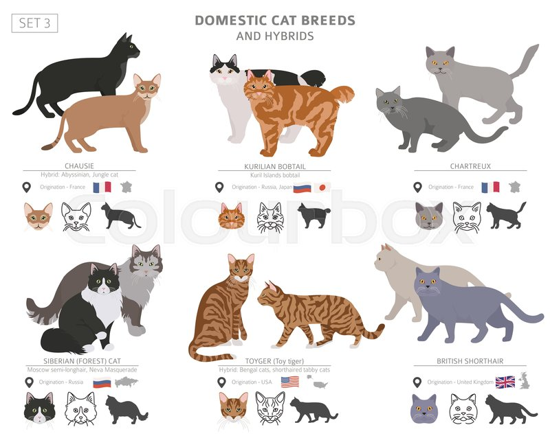Domestic Cat Breeds And Hybrids Stock Vector Colourbox