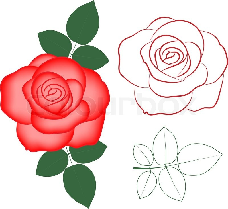 Red Rose Stock Vector Colourbox
