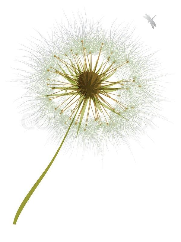 Isolated Vector Illustration Dandelion Flower Stock