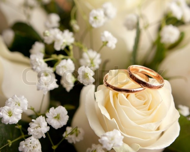 Gold wedding rings on flower   Stock Photo   Colourbox