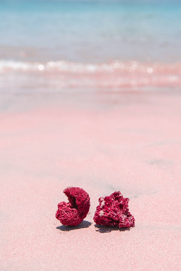 Pink Sand Beach Indonesia By Carley Rudd Artfully Walls