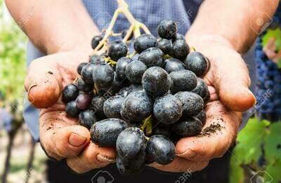 International Certificate in Wine Essentials, Viticulture & Wine Production