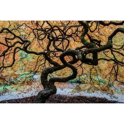 Dancing Tree -- Rob Tilley