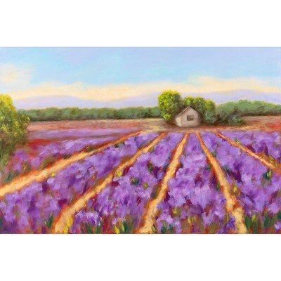Provence Lavender Field -- Hilda Bordianu