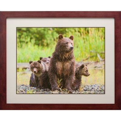 Grizzly Bear Mom with Triplets -- Jeff Lane
