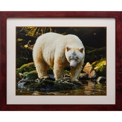 Spirit Bear -- Jeff Lane