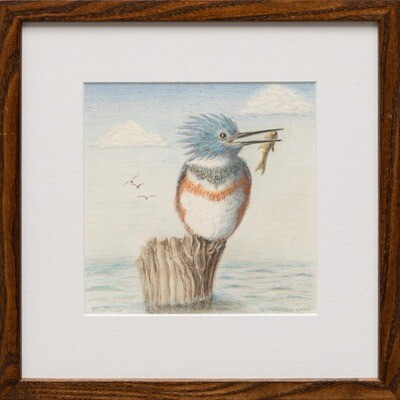 Belted Kingfisher -- Sylvia Portillo