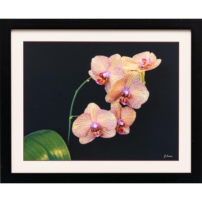Yellow With Mauve Veined Orchids -- Jeff Lane