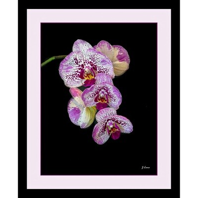 White and Purple Speckle Orchids -- Jeff Lane