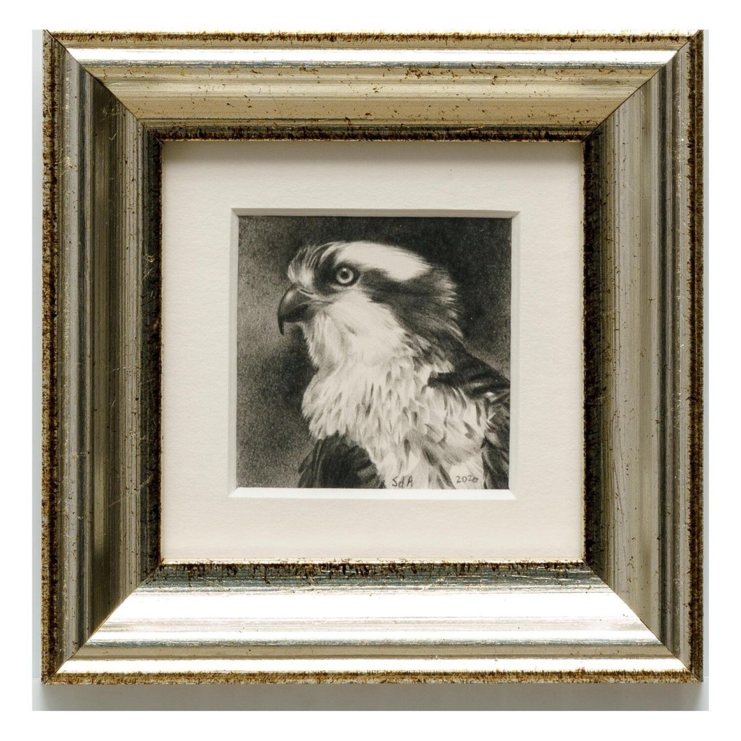 Adair, Sue deLearie -- Osprey Portrait II