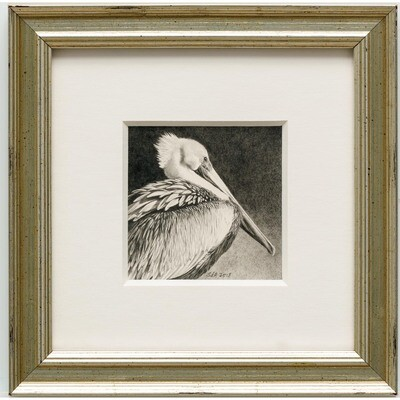 Adair, Sue deLearie -- Pelican Portrait