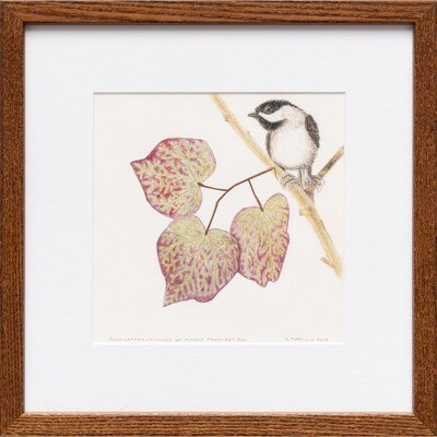 Black Capped Chickadee on Forest Pansy Red Budud -- Sylvia Portillo