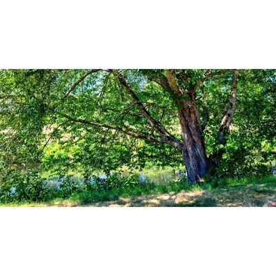 Sammamish River Summer -- Larey and Phyllis McDaniel