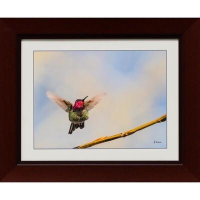 Anna's Hummingbird 2 -- Jeff Lane