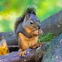 Nuts -- Phyllis McDaniel