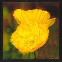 Yellow Joy -- Lisa Marie Kostal