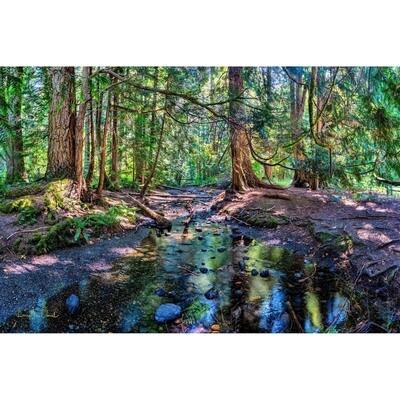 Mackey Creek -- Larey McDaniel